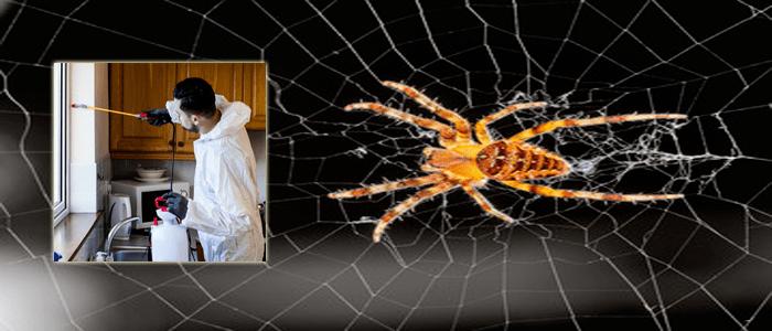 Best Spider Extermination Service