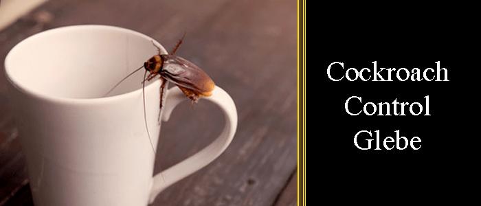 Cockroach Control Glebe